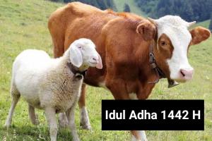 IDUL ADHA, Membangun Optimisme Di tengah Dahsyatnya Pandemi